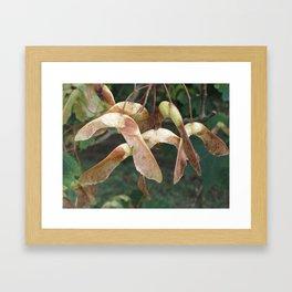 Maple seeds Framed Art Print