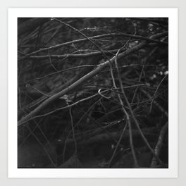twigs and branches Art Print