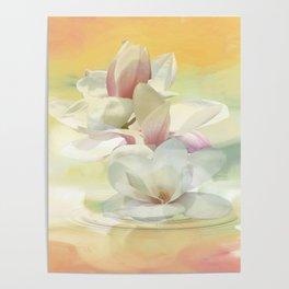 Magnolienblüten Poster