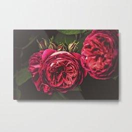 Vintage Roses 01 Metal Print