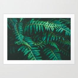 Ferns II Art Print