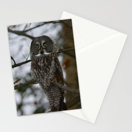 Great Gray Stationery Cards