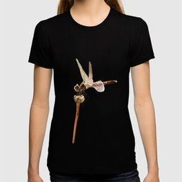 Dragonfly Resting On Seed Head Isolated T-shirt