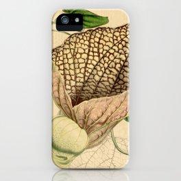 Aristolochia grandiflora iPhone Case