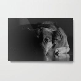 Dog lying on floor Metal Print