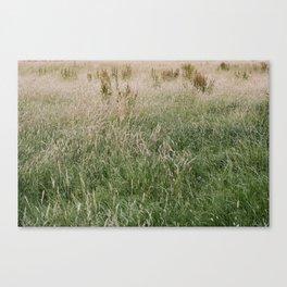 English Grasses Canvas Print