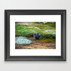 Magellanic Penguins in Love Framed Art Print