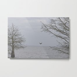 In the Osprey's territory Metal Print