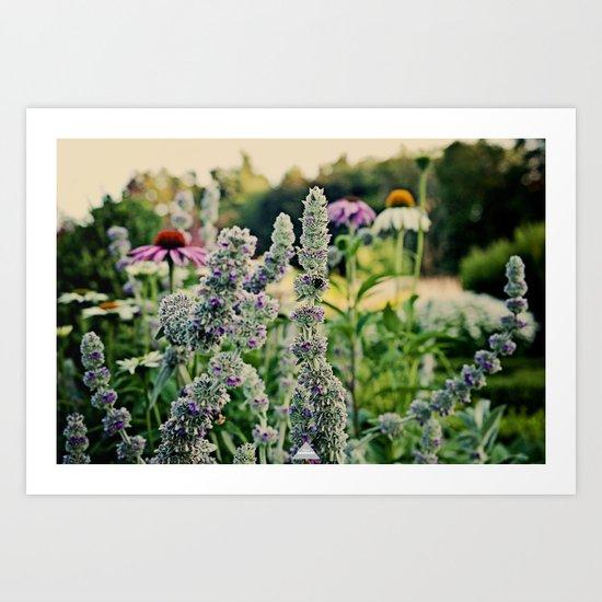 Flight Of The Bumblebee...  Art Print