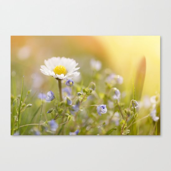 Daisy and court- Daisies Flowers Flower Meadow Spring #Society6 Canvas Print