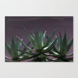 Aloe Aloe Aloe Canvas Print