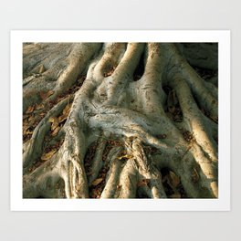 Roots in the Afternoon Art Print