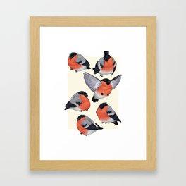 Eurasian Bullfinches Framed Art Print