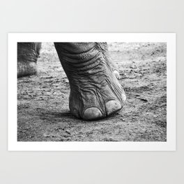 The Elephant Sanctuary 01 Art Print