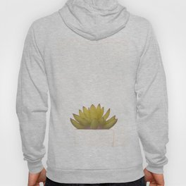 Cactus in flower pot on white background Hoody