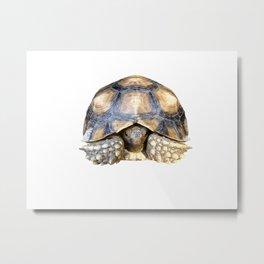 Sulcata Tortoise Metal Print