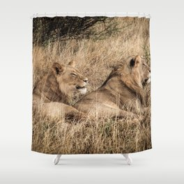 Camouflaged African Male Lions of the Kalahari Desert Shower Curtain