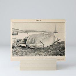 W Sidney Berridge - A Book of Whales (1900) - Figure 23: Stranded Rarqual Mini Art Print