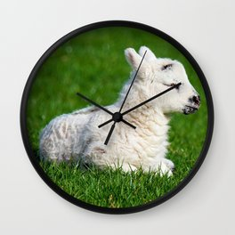 A Sleepy Newborn Lamb In A Field Wall Clock