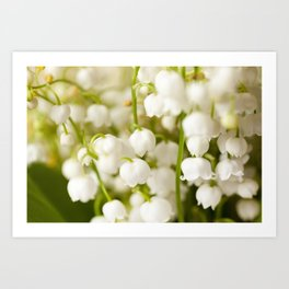 Flower lily of the valley Art Print