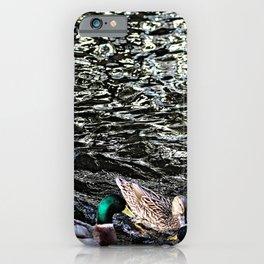 Mallard Ducks Swimming Waterfowl Lake iPhone Case