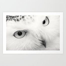 owl chouette bird white Art Print