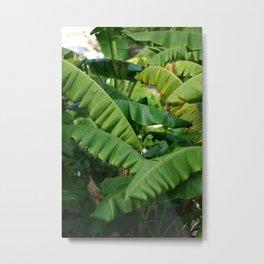 Banana Tree Leaves green photography Metal Print