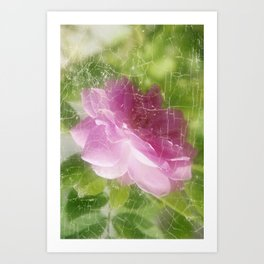 Pinky Rose Art Print