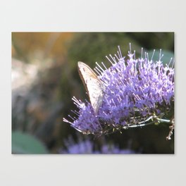 Butterfly and the lilac flower Canvas Print