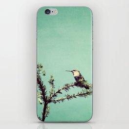 Hummingbird at rest iPhone Skin