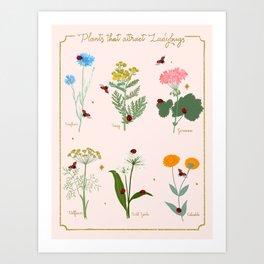 Flowers and Ladybug Chart Art Print