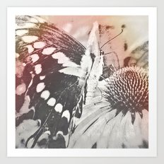 rose glow butterfly and coneflower Art Print
