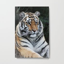The jewel of the jungle Metal Print