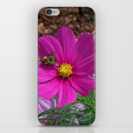 Coreopsis Flower with Bee iPhone Skin