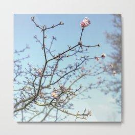 Spring branches Metal Print
