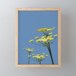 Fennel flowers Framed Mini Art Print