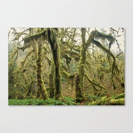 Hall Of Mosses Canvas Print