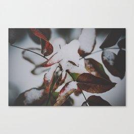 _DSC7051 Canvas Print
