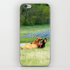 Horses & Bluebonnets iPhone Skin
