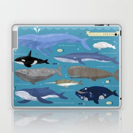Whale Species Laptop & iPad Skin