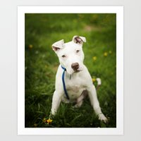pit bull Art Prints featuring Pit Bull Puppy by Kaelyn Ryan Photography
