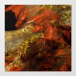 Dehiscence 14 Canvas Print
