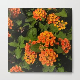 Vibrant Wild Flowers Framed By Lush Leaves Metal Print