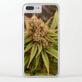 Dieharder Clear iPhone Case