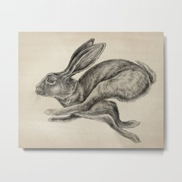 Animals | Hare Animal Illustration | Bunny | Rabbit | Nursery | Baby Room | Drawing Metal Print