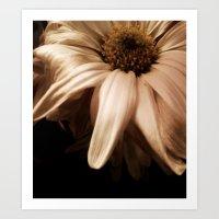 wilting flower Art Print