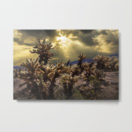 Cholla Cactus Garden bathed in Sunlight in Joshua Tree National Park California Metal Print