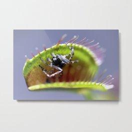 The spiders in the Venus Flytrap Metal Print