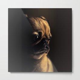 Sad Pug Metal Print