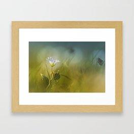 Cerastium fontanum subsp. vulgare  Framed Art Print